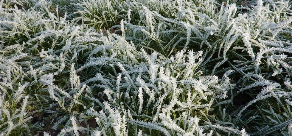 Winter-lawn