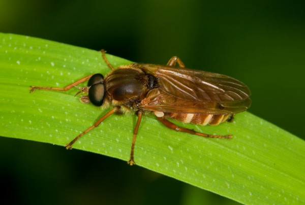 Frit-Fly-lawncare