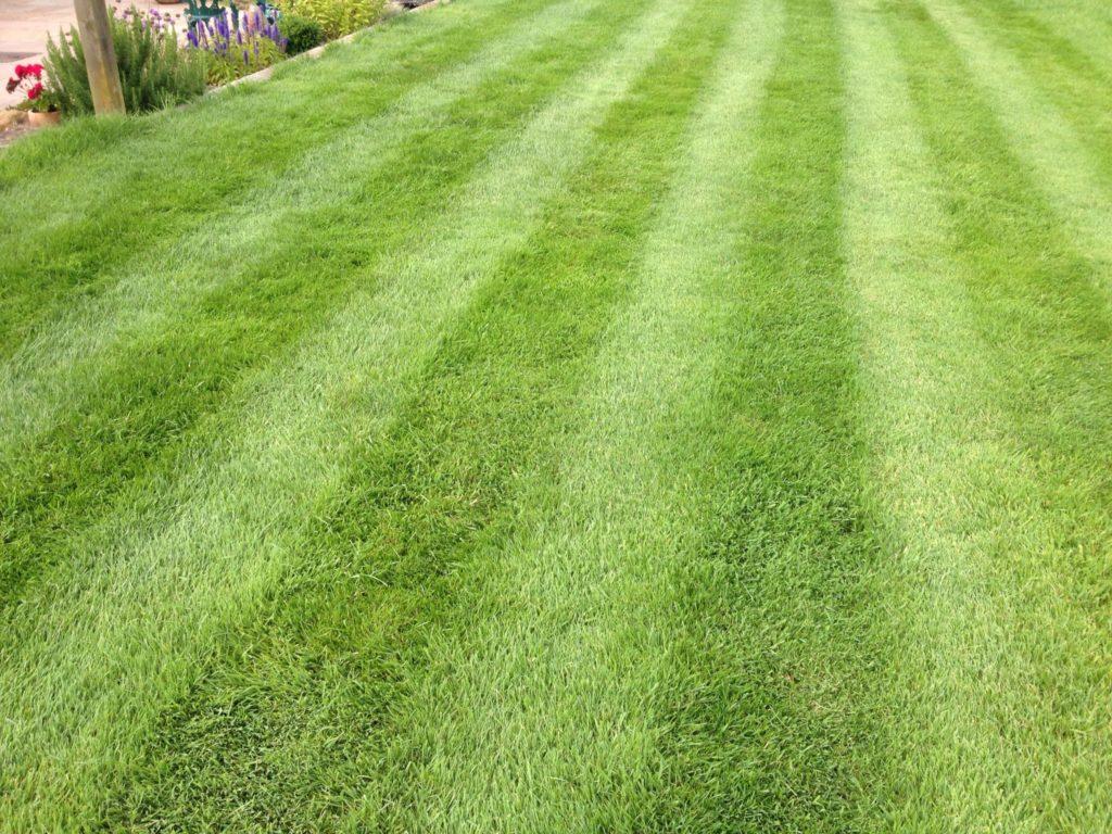 Spring Lawn Treatment