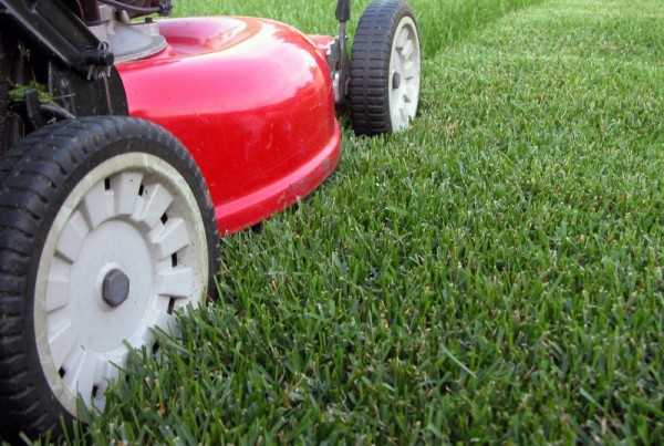 Other common lawn problems
