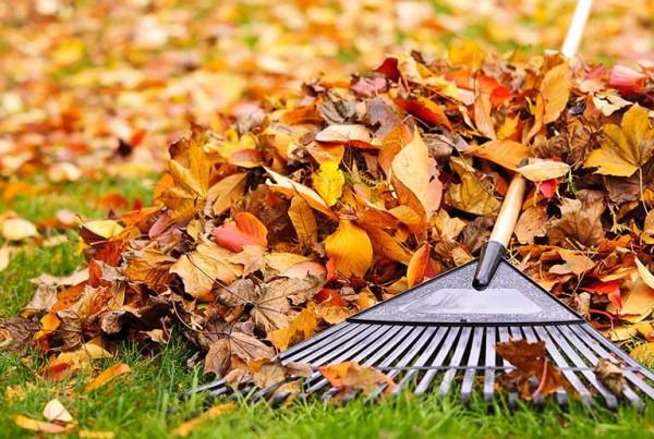 Autumn Treatment