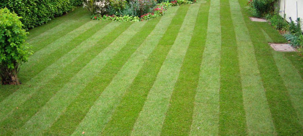 dads-amazing-lawn