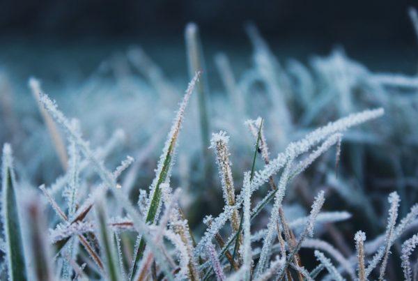 Winter Treatment